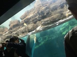 イルカの前で